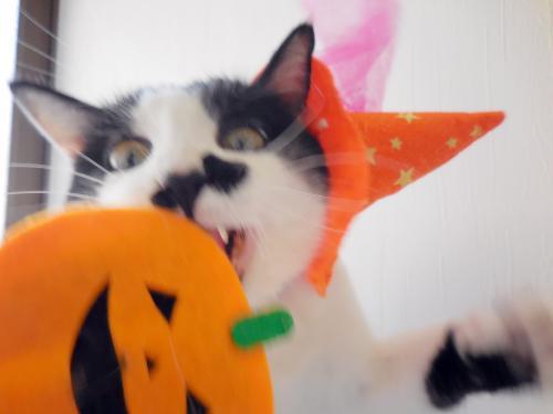 くぅ変顔とかぼちゃ