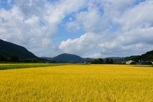 s里山の恵み (2)