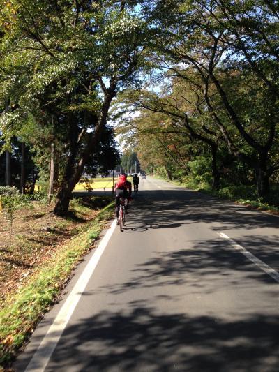 桜並木ロード