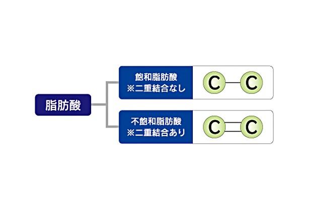 脂肪酸アイキャッチ1-616x412