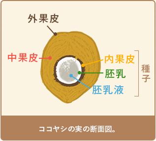 coconut_sec1_1.png