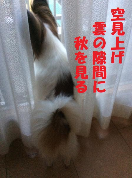 20150821_201345346_iOS_convert_20150823071939.jpg