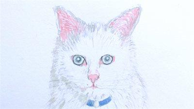 aw白猫 002