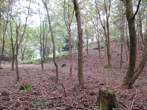 IMG_0050  コース中唯一開けた林