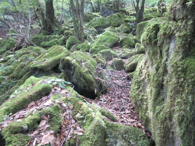 IMG_0217 苔むした岩場を登る