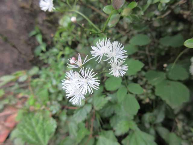 IMG_0255  ???の花