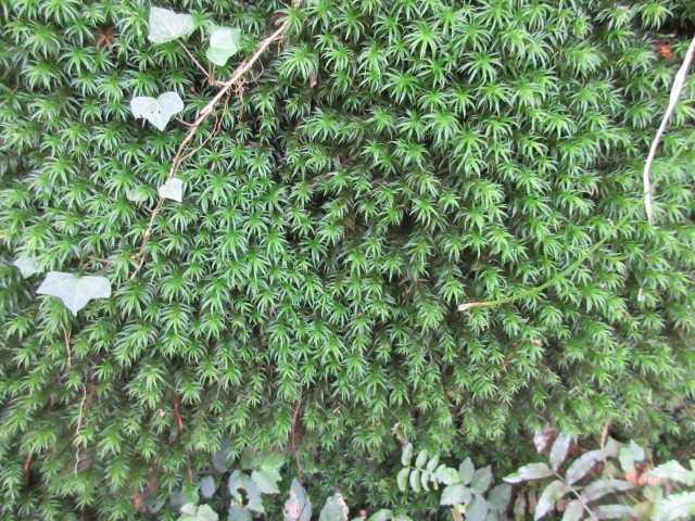 IMG_0425緑美しい苔