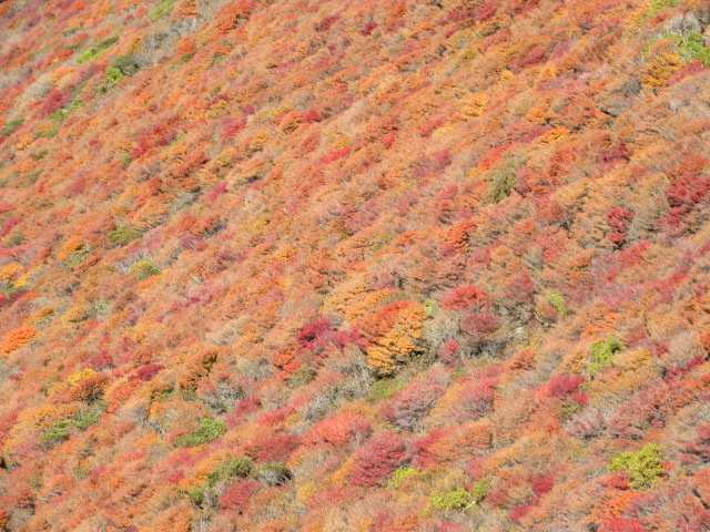 IMG_0032ドウダンツツジの紅葉をアップ