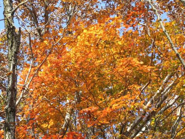 IMG_0024 急登の連続時折紅葉が現れる