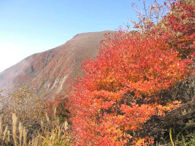 IMG_0053 紅葉真盛りのドウダンツツジ