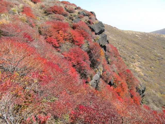IMG_0096白口岳西尾根の紅葉ですここで昼食他方向から見ると絶壁ですが穴場、1人しか座ることが出来ません