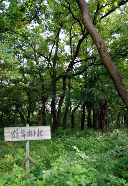 ☆IMGP8733