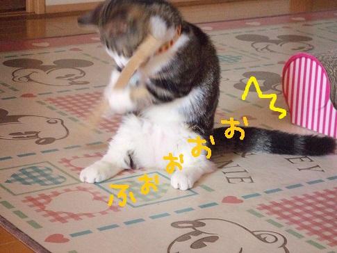 nico461.jpg