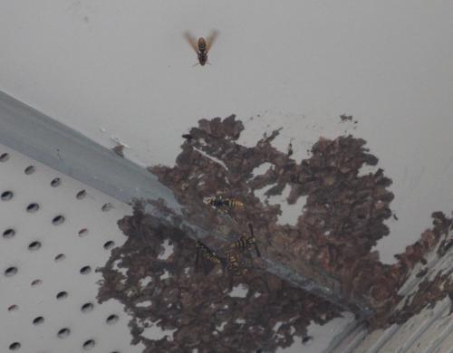 蜂の巣 5