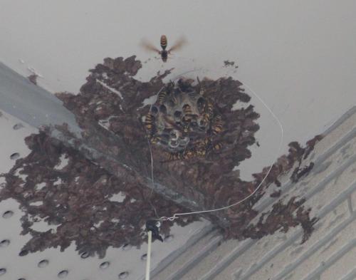 蜂の巣 4