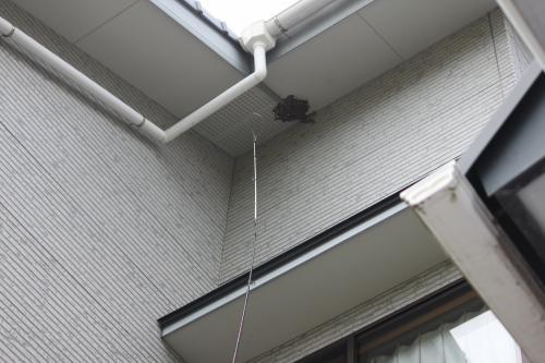 蜂の巣 3