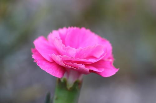 モコと花 4