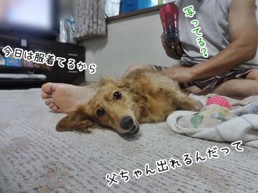 kinako3146.jpg