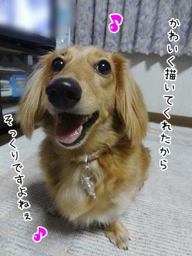 kinako3155.jpg