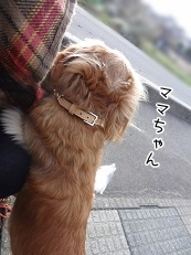 kinako3163.jpg