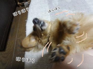 kinako3166.jpg