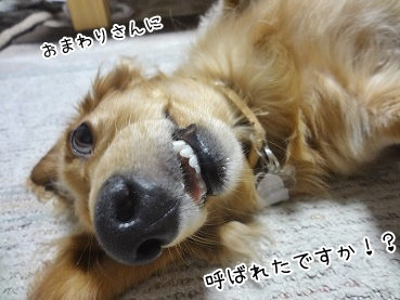 kinako3175.jpg