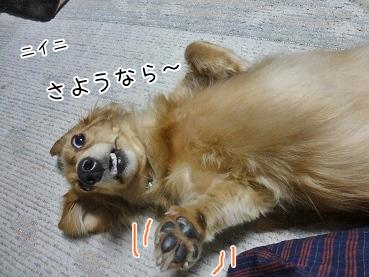 kinako3177.jpg