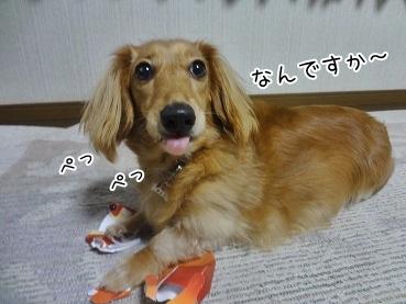 kinako3185.jpg