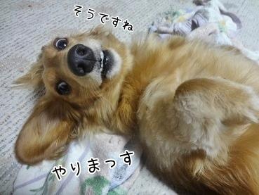 kinako3193.jpg