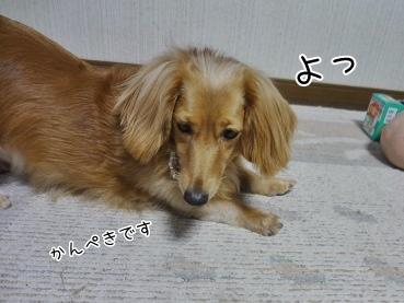 kinako3194.jpg