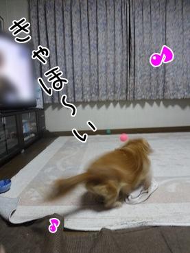 kinako3197.jpg