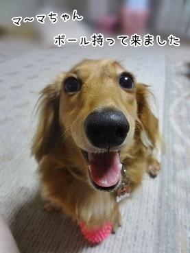 kinako3201.jpg