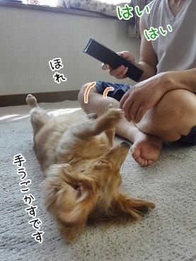 kinako3222.jpg
