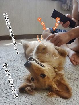 kinako3224.jpg