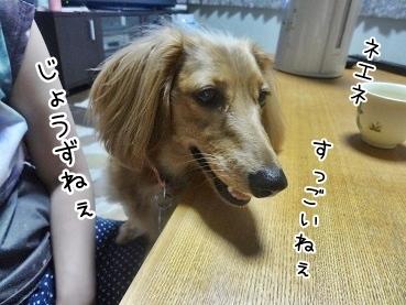 kinako3239.jpg