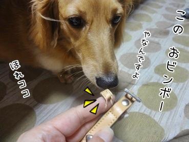 kinako3243.jpg
