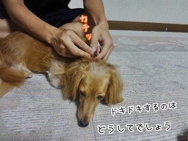 kinako3245.jpg