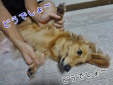 kinako3247.jpg