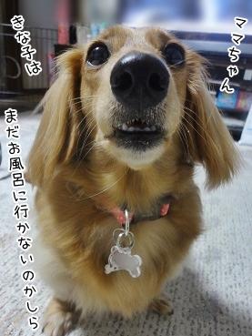 kinako3256.jpg