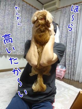 kinako3267.jpg