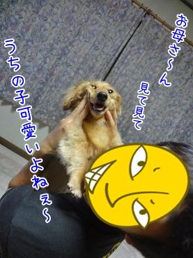 kinako3268.jpg