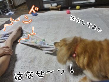 kinako3270.jpg