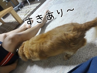 kinako3271.jpg