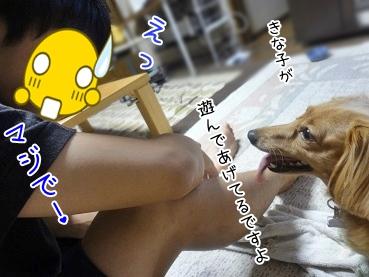 kinako3274.jpg