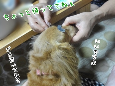kinako3276.jpg