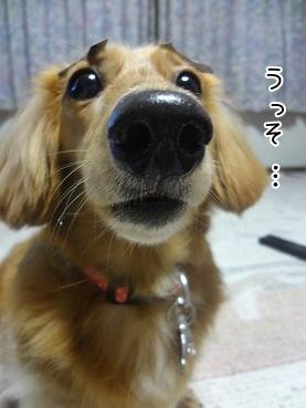 kinako3278.jpg