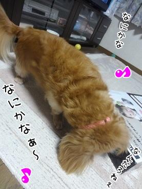 kinako3281.jpg