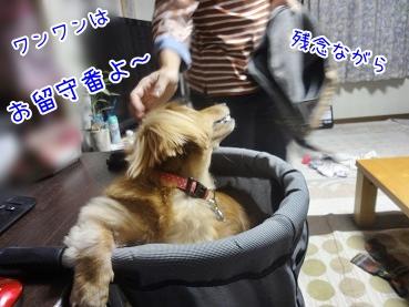 kinako3289.jpg