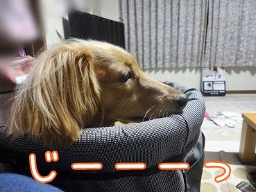 kinako3292.jpg