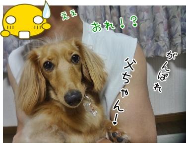 kinako3310.jpg
